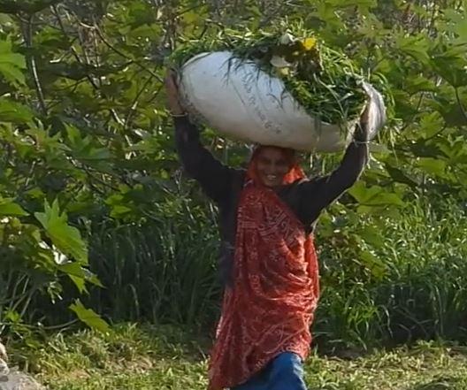 arkema castor bean fields of india